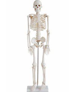 webshop overig Webshop Overig menselijk skelet 85 cm 1 250x300